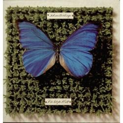 Schmetterlinge – Die Letzte Welt|1982 Eigelstein Musikproduktion – ES 2018